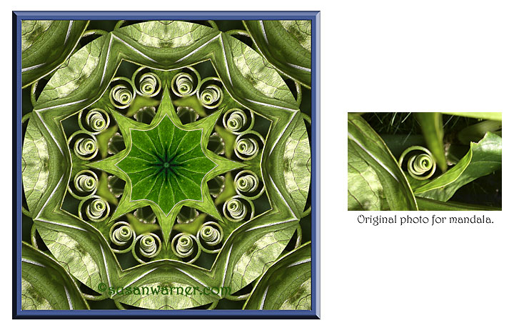 leaves_tendrils_mandala.jpg