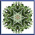 Cactus Mandala Art Gallery Gift Shop