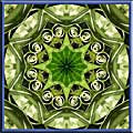 Leaves and Tendrils Mandala Art Gallery Gift Shop