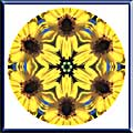 Sunflower and Bee Mandala Art Gallery Gift Shop